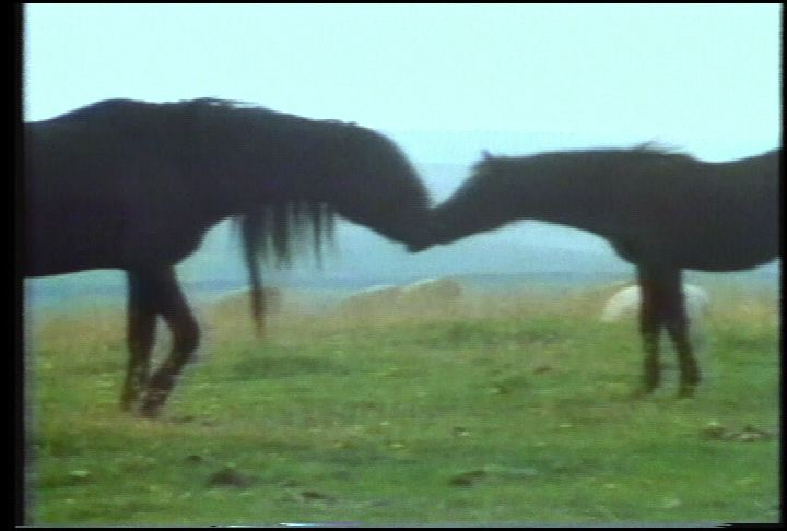 still from Slow Gin Soul Stallion, by Animal Charm